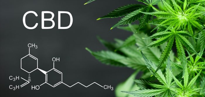 Chemical skeletal structure of CBD C21H30O2 with hemp plant
